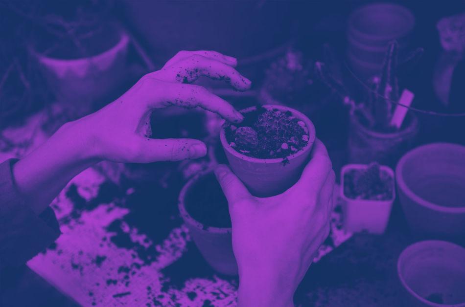 Acacia, réinventer le métier de fleuriste